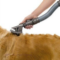 pet hair removal from carpet