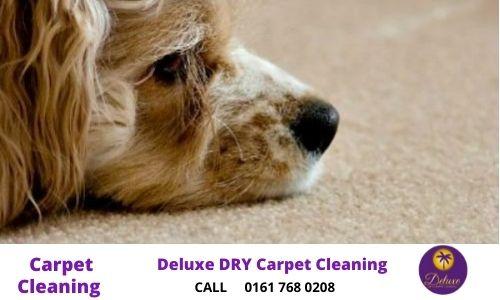 carpets- pet owners